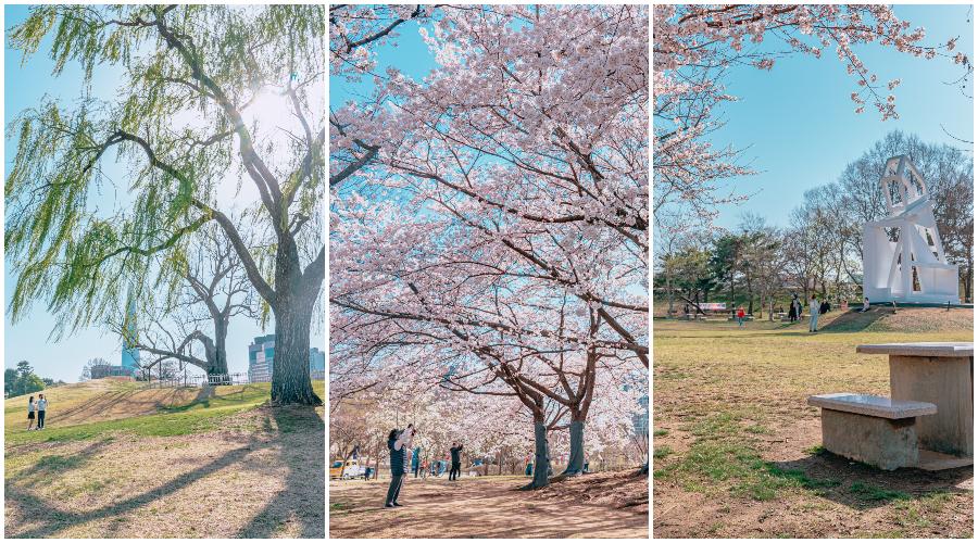 왼쪽 사진: 버드나무와 한 쌍의 커플이 햇빛이 쨍쨍하고 푸른 풍경 속에서 그 주위를 걷고 있다; 가운데 사진: 벚꽃이 만발한 나무들과 아름다운 벚꽃 사진을 찍으려는 사람들, 오른쪽 사진: 공원과 나무들 사이에 듬성듬성있는 벚꽃