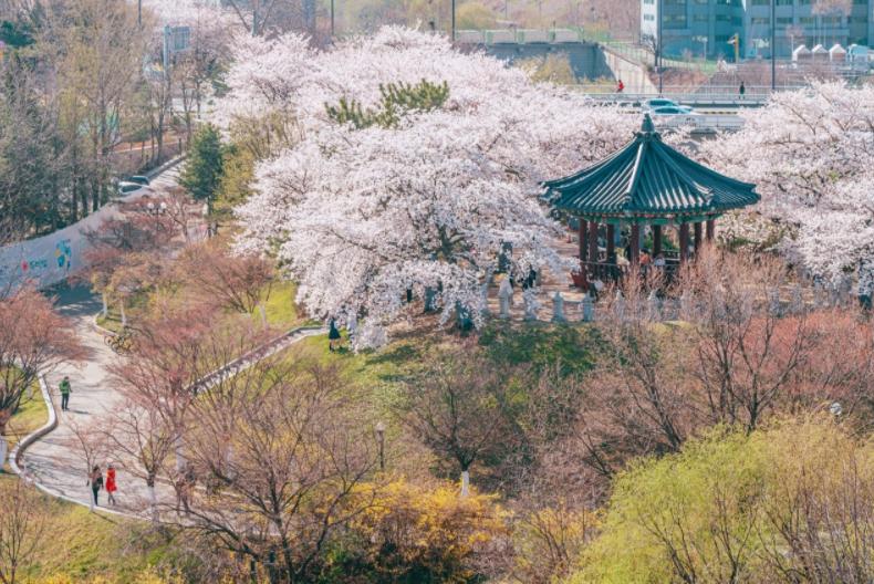 위에서 내려다보는 서울의 벚꽃 풍경