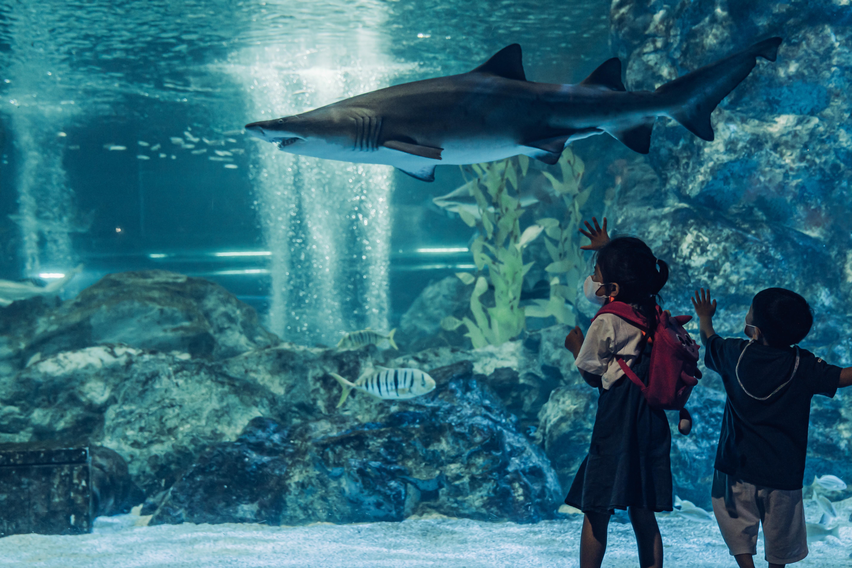 Фото мальчика и девочки перед большим аквариумом, в котором плавает большая рыба, в океанариуме COEX