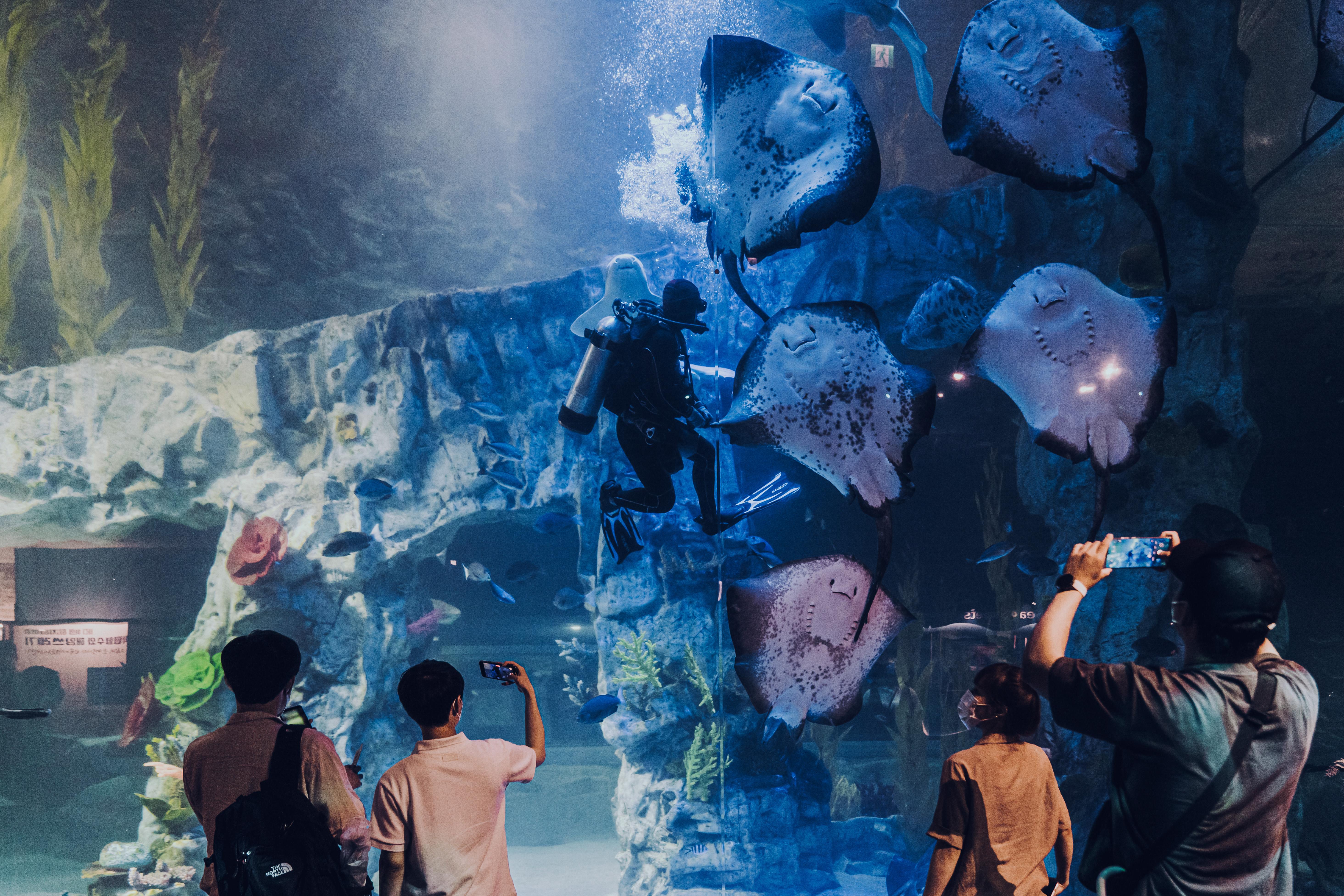 Фото людей, фотографирующих аквалангиста в большом аквариуме со скатами