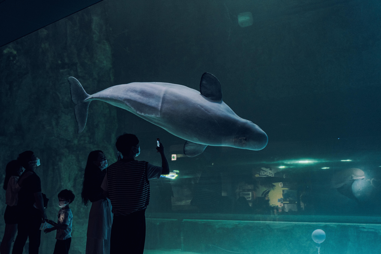Фото аквариума с белухой и людьми, фотографирующих аквариум