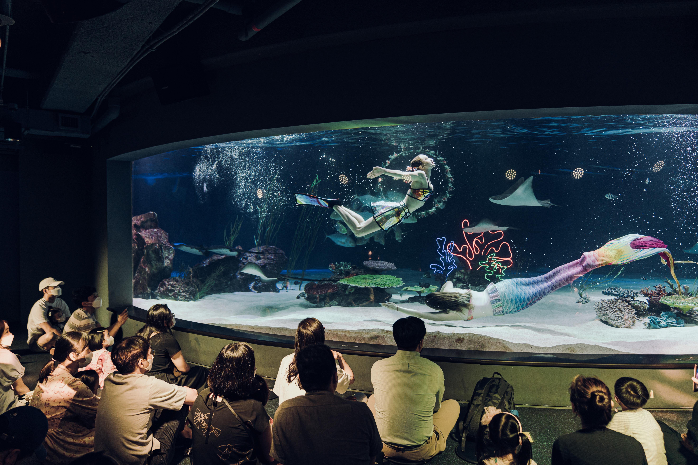 Фото шоу с русалками. На фото две аквалангистки в костюмах русалок, плавающих в аквариуме с рыбами, и зрители, сидящие на полу перед аквариумом