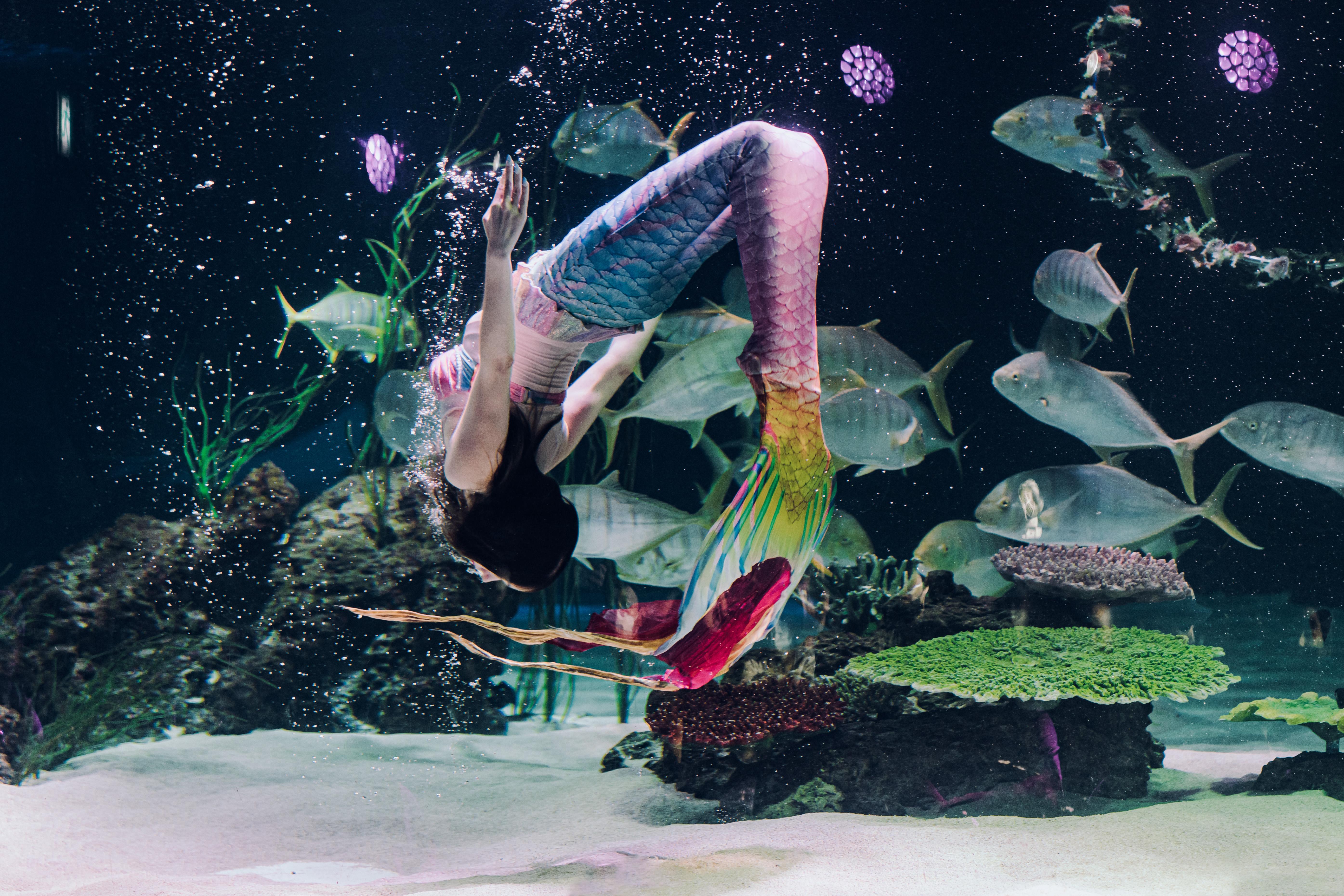Фото аквалангистки в костюме русалки внутри аквариума с рыбами