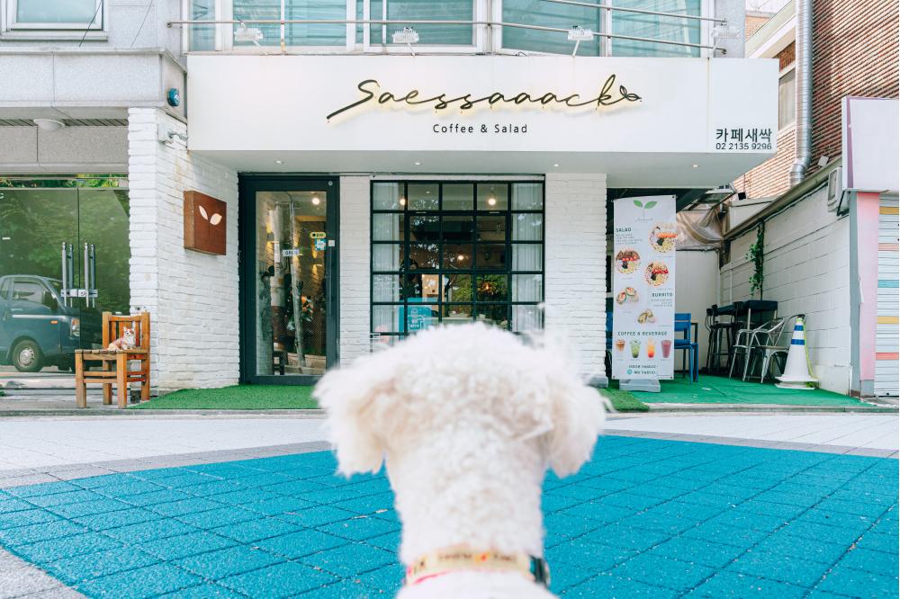 Белая собака сидит задом к камере и смотрит на здание Кафе Saessaaack, которое можно посещать вместе с животными